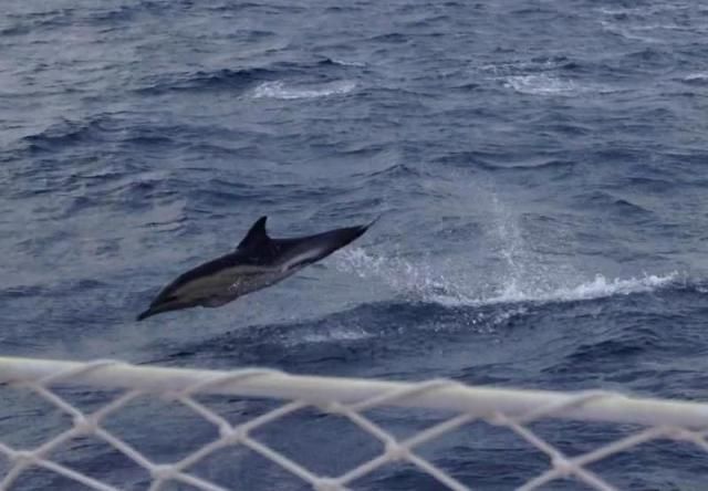 Dolphin Biscay 4