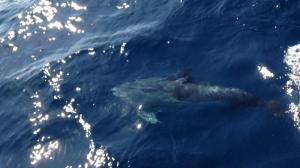 Dolphin 5