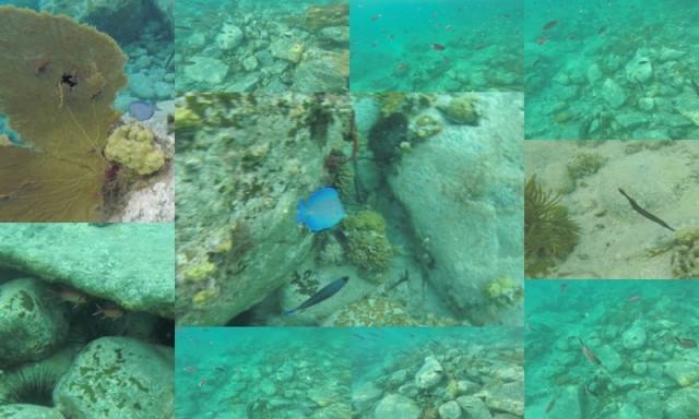 Pain Sucre Snorkel1